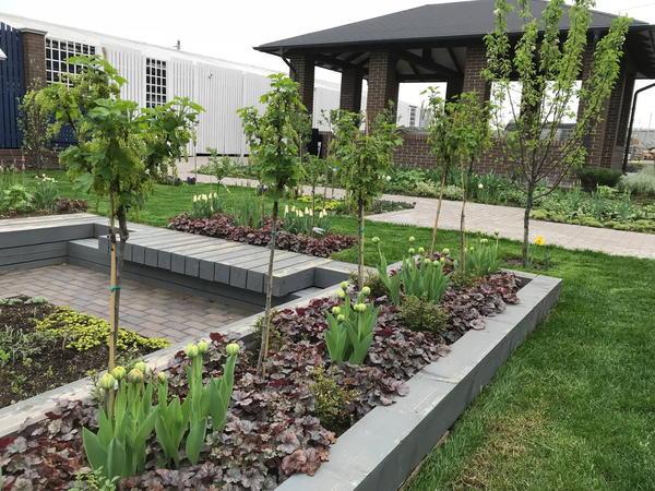 Необычные деревья и кустарники помогают эффективно использовать площадь участка