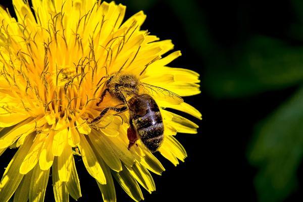 """В приготовлении этого """"меда"""" пчелы не участвуют"""