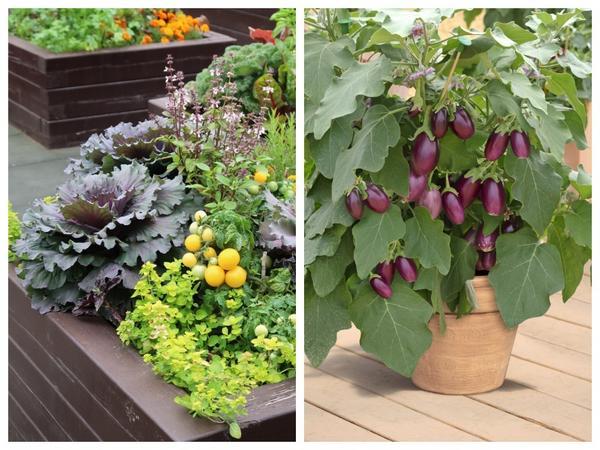 Контейнеры прекрасно подходят для создания декоративного огорода в миниатюре