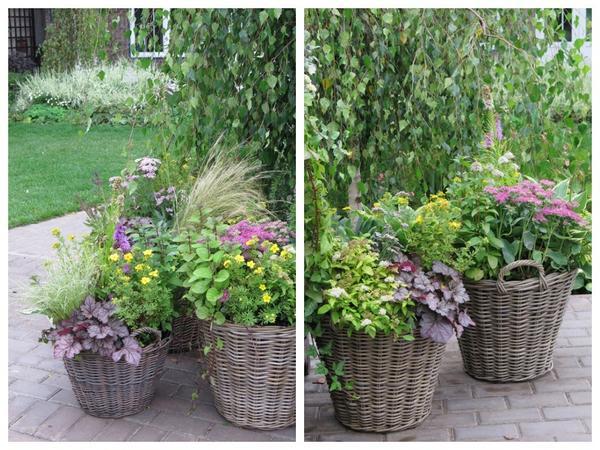 Для контейнерного озеленения можно выбирать не только однолетние, но и многолетние растения с красивыми цветами или выразительной листвой