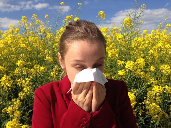 Народные средства могут облегчить симптомы при сенной лихорадке