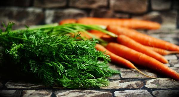 Морковная ботва - лекарственное и косметическое сырье