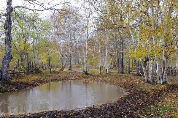 Октябрь - листва с деревьев облетает, приходят холода