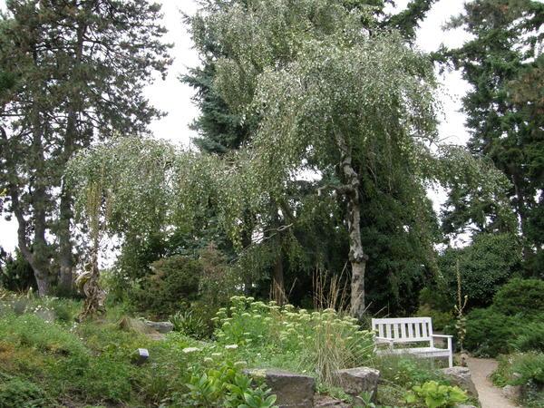 Сад Карла Форстера состоит из разных тематических уголков