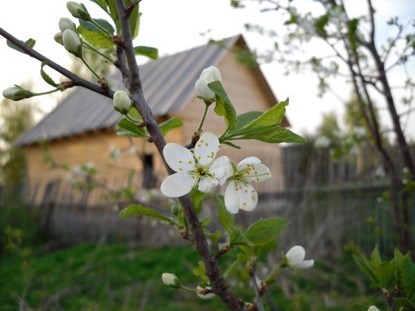 Жизнь не кончается. И снова придет весна! Фото автора
