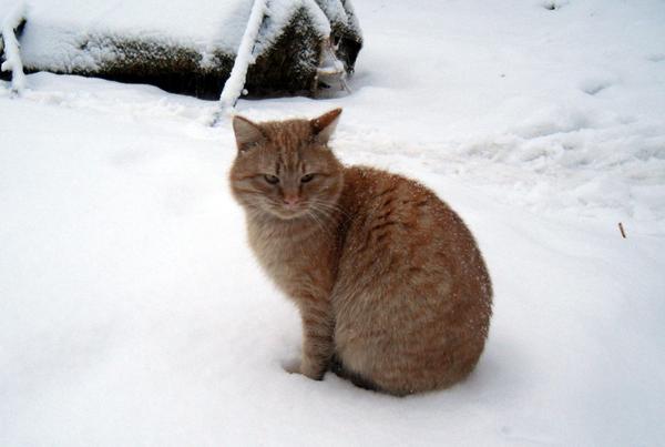 Вот кот откуда-то знает, что для него будет хорошо, а от чего стоит воздержаться :) Фото автора
