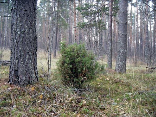 Прогулка в лес - тоже лекарство. Фото автора