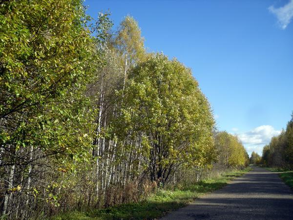 С одной стороны дороги еще почти лето, ивы зеленеют...