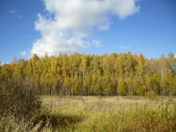 Осень золото рассыпала по лесу...