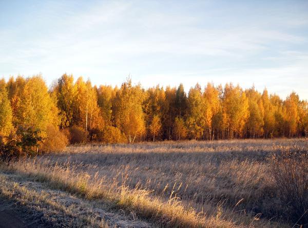 На траве серебрится иней, а вдали - в позолоте лес...