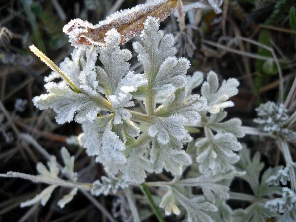 Серебряные кружева - предвестники скорой зимы
