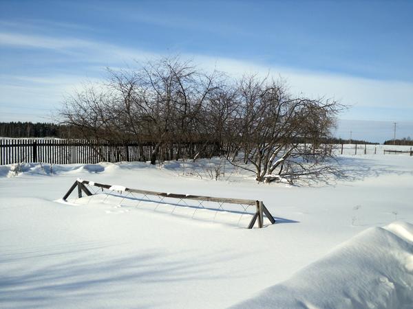 """Снег - лучшее укрытие, под таким """"одеялом"""" все спокойно зимует"""