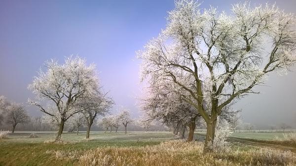 Ноябрь не зря называют воротами зимы
