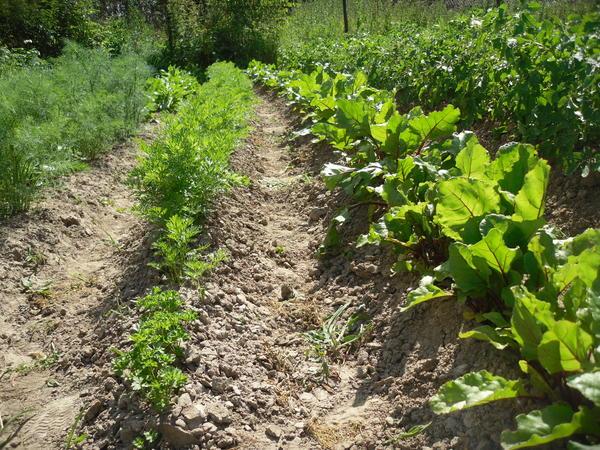"""Записки ретрограда, или Почему я возвращаюсь к """"дедовским"""" методам обработки почвы"""