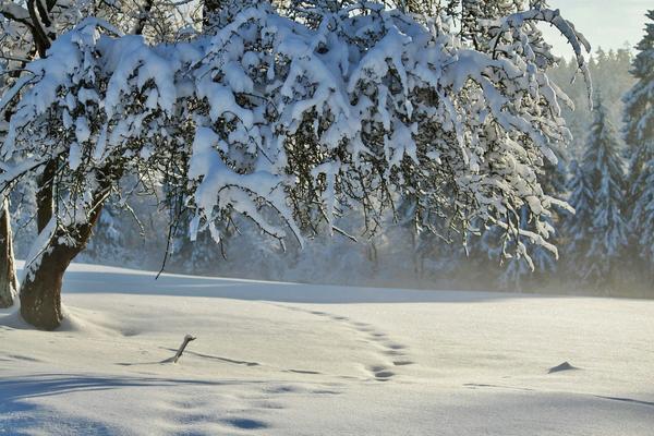 Декабрь укутывает все снежным покрывалом