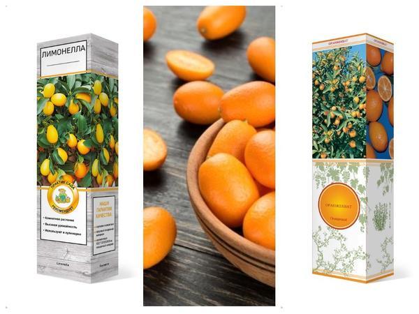 В домашних условиях можно выращивать разнообразные цитрусовые