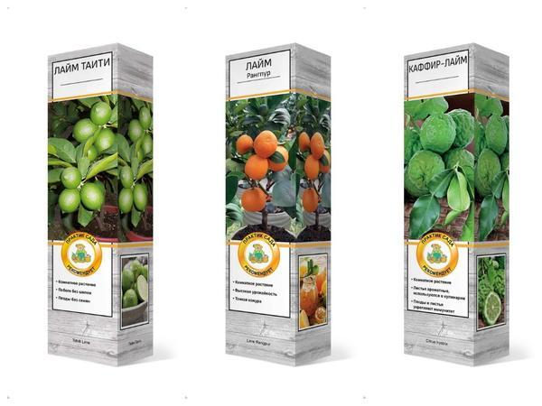 Из широкого ассортимента саженцев цитрусовых каждый может подобрать растения по вкусу