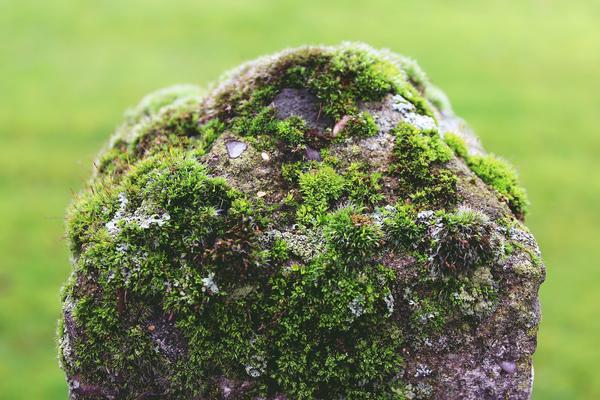 Обросший мхом камень - естественно, но не обязательно красиво