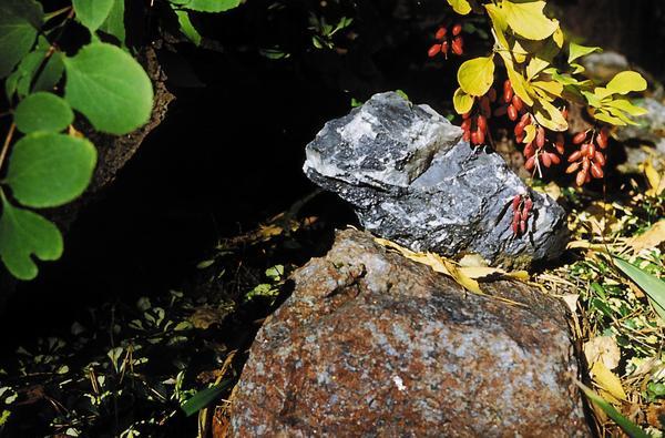 У камней в саду своя жизнь...