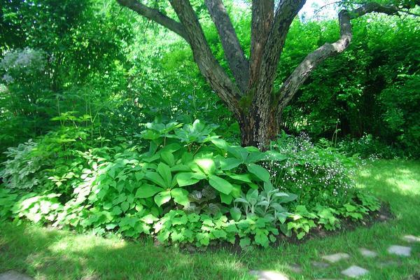 Даже тень - не помеха для посадок, если подобрать подходящие растения