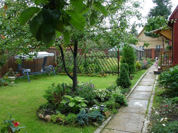Выбор растений, хорошо соседствующих с плодовыми деревьями, весьма широк