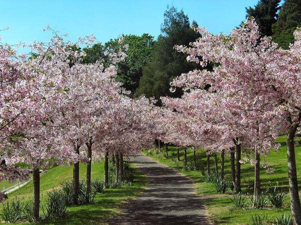 Истинный сад должен быть усладой для всех чувств