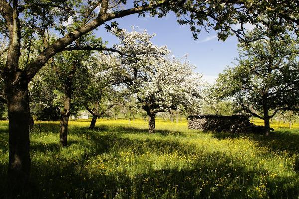 В русских садах предпочтение отдавалось плодовым деревьям и ягодным кустарникам