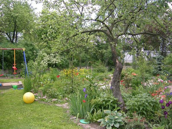 Цветы в приствольных кругах подавляют сорняки и образуют непрерывно цветущий ковер с весны до осени