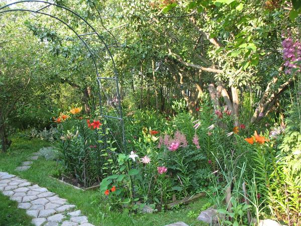 Уход за цветниками в плодовом саду состоит в том, чтобы обеспечить полноценное питание для всех растений