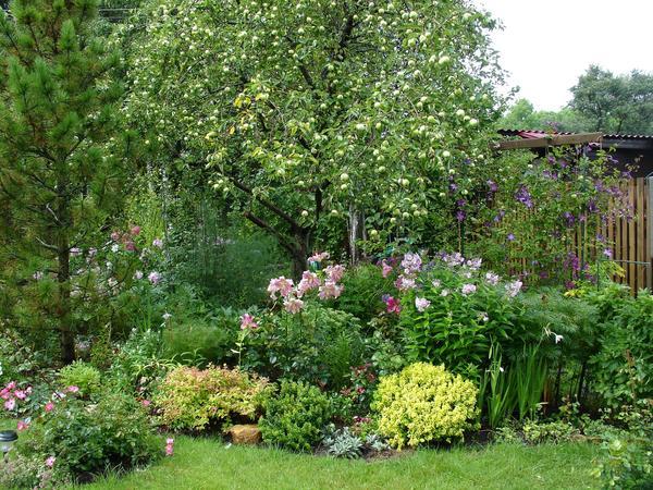 Цветы прекрасно живут в плодоносящем саду