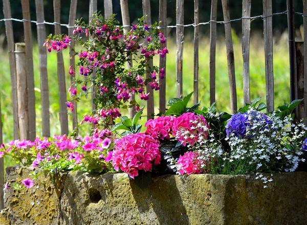 Даже самый непритязательный садик преображается, когда цветут однолетники