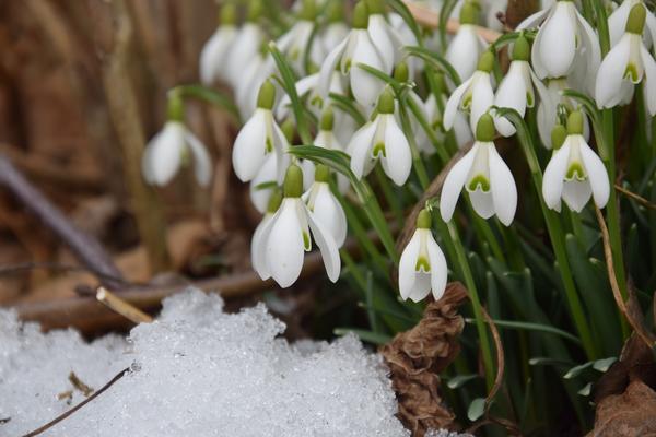 Март. Весна на пороге - цветоводов ждут большие дела