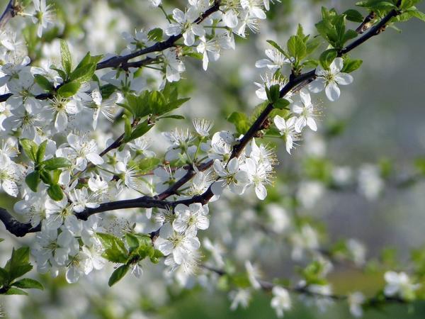 Май, цветут сады