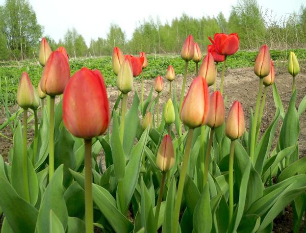 Эти цветы - для вас!