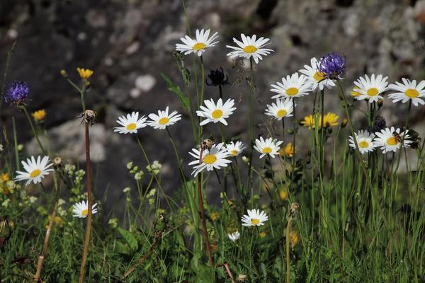 Июнь - время свежей травы и луговых цветов