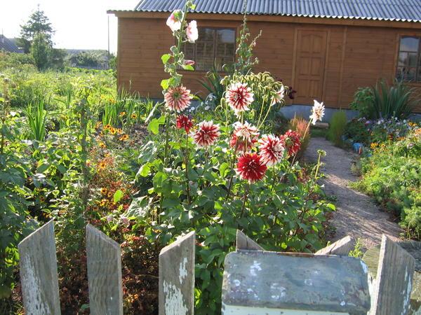 Палисадник - небольшой деревенский садик перед домом