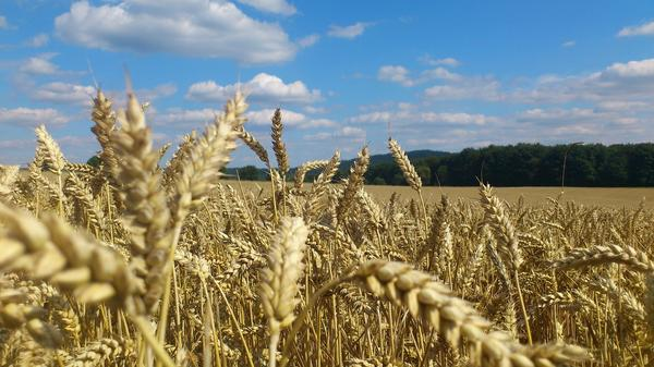Август - время урожая