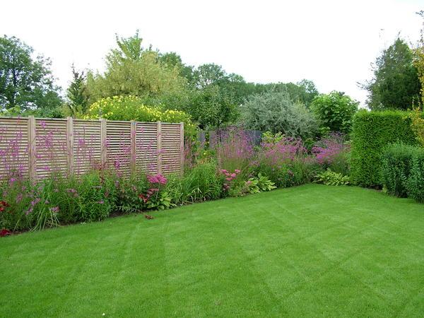 Хотите красивый газон? Сейте его в августе!