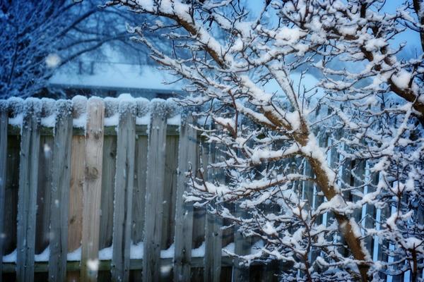Какой окажется зима, предсказать сложно