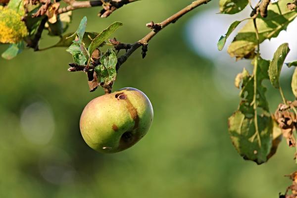 Могут ли капризы погоды оставить нас без урожая?