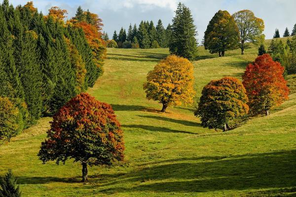 Лиственные деревья и кустарники окрашиваются осенью в разное время разными красками