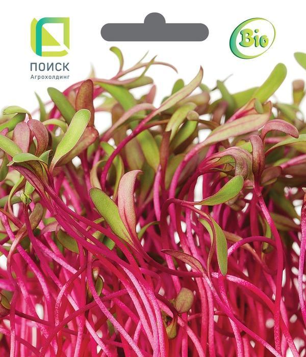 Концентрация полезных веществ в микрозелени выше, чем в зрелых овощах или проростках