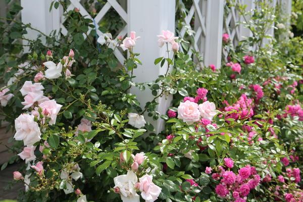 Удачное сочетание разных форм и размеров цветков