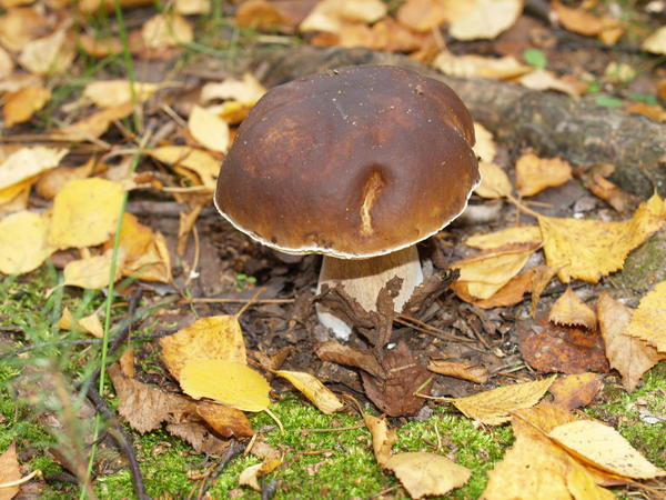 """Нет времени для """"тихой охоты""""? Надо вырастить грибы у дома!"""
