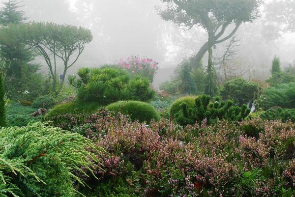 Хвойным растениям нужны подходящие компаньоны