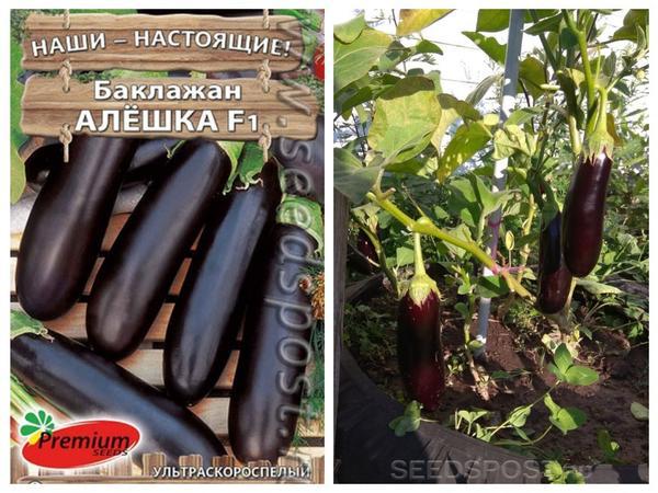 "Гибрид 'Алешка' F1 от компании ""Premium seeds"". Фотографии с сайта seedspost.ru, фото справа загружено покупателем"