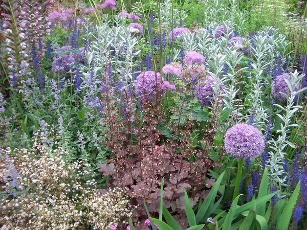 Композиции с пряно-ароматическими растениями сочетают в себе пользу и красоту