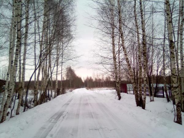 """Вдоль дороги, сразу за заборами начинается """"лосиное пастбище"""""""