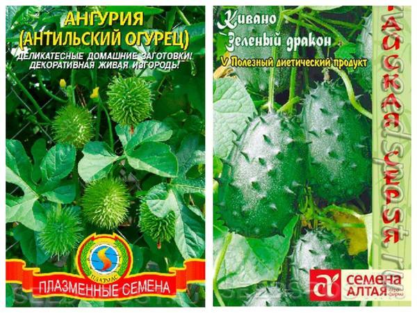Ангурия и кивано - родственники, но все-таки разные культуры. Фото с сайта seedspost.ru