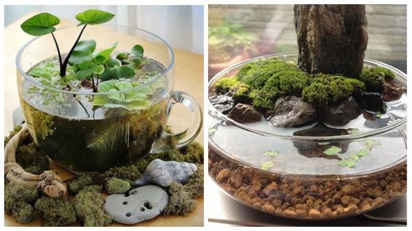 Любите миниатюры? Создайте крохотный водоем в чашке!